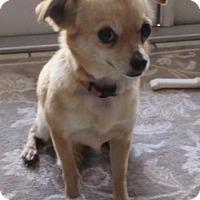 Adopt A Pet :: C927 Ginger - Bay Springs, MS