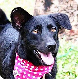 Bernese Mountain Dog Mix Dog for adoption in San Francisco, California - Donny