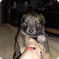 Adopt A Pet :: Sarah - Charlestown, RI