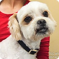 Adopt A Pet :: Cockapoo - Moreno Valley, CA