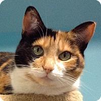 Adopt A Pet :: Lima - Toronto, ON