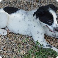 Adopt A Pet :: Kensy - Prole, IA