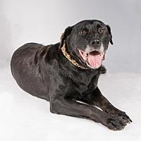 Adopt A Pet :: Razzle - St. Louis Park, MN