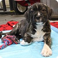 Adopt A Pet :: Valentina - Winters, CA