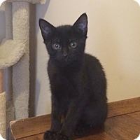 Adopt A Pet :: Jeremiah - Duluth, GA