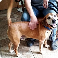 Beagle Mix Dog for adoption in Rootstown, Ohio - Stymie