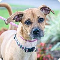 Adopt A Pet :: Goofy aka Jager - Gainesville, FL