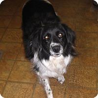 Adopt A Pet :: Rhoda - Louisville, KY