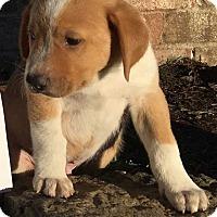 Adopt A Pet :: DAK - E. Greenwhich, RI