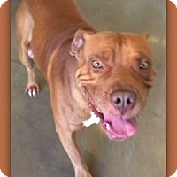 Adopt A Pet :: Eddy Flap Jack 24409 - Pampa, TX