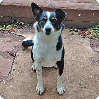 Adopt A Pet :: bitty - Midvale, UT
