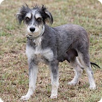 Adopt A Pet :: Gizmo - Broken Arrow, OK