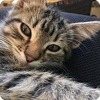 Adopt A Pet :: Jack - Middleton, WI