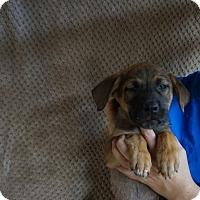 Adopt A Pet :: Tomba - Oviedo, FL