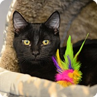 Adopt A Pet :: Felix - Gardnerville, NV