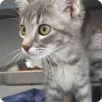 Adopt A Pet :: Rylan - Waupaca, WI