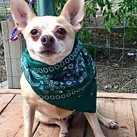 Adopt A Pet :: Andrew - Santa Ana, CA