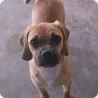 Adopt A Pet :: Henry - Bonifay, FL