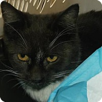 Adopt A Pet :: BRONSON - Gloucester, VA