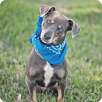 Adopt A Pet :: Luke - Kingwood, TX