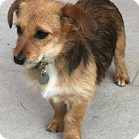 Adopt A Pet :: Abby - Atlanta, GA