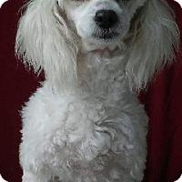 Adopt A Pet :: MITZY - pasadena, CA