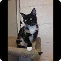 Adopt A Pet :: Gabby - Beacon, NY