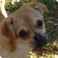 Adopt A Pet :: SADE - Hagerstown, MD