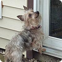 Adopt A Pet :: Mushu - Downers Grove, IL