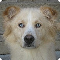 Adopt A Pet :: Ida - Chicago, IL