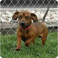 Adopt A Pet :: Kahlua - Meridian, ID