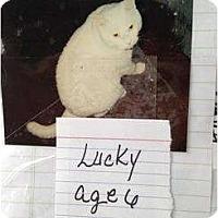 Adopt A Pet :: Lucky - Mobile, AL