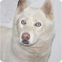 Adopt A Pet :: Ice - Port Washington, NY