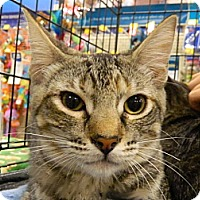 Adopt A Pet :: Anna - The Colony, TX