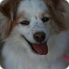 Adopt A Pet :: Macciato