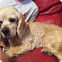 Adopt A Pet :: Valentine - Santa Barbara, CA