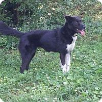 Adopt A Pet :: Bebee - Homewood, AL