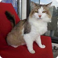Adopt A Pet :: OLIVER - McKinleyville, CA
