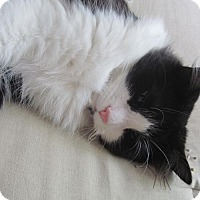 Adopt A Pet :: zz 'Oreo' courtesy post - Cincinnati, OH