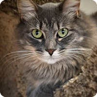 Adopt A Pet :: Orphie - Byron Center, MI