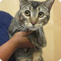 Adopt A Pet :: 281252 - Wildomar, CA