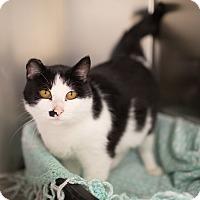 Adopt A Pet :: Olive - Toronto, ON