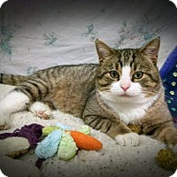 Adopt A Pet :: Jose' the 'tail talking' cat - Longest Resident - Durand, WI