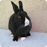 Adopt A Pet :: Clayton - Bonita, CA