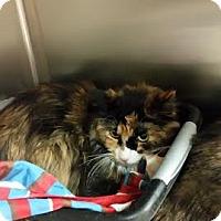 Adopt A Pet :: Boots - Chippewa Falls, WI
