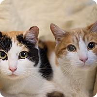 Adopt A Pet :: Kelly & Ryan - Staten Island, NY
