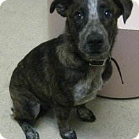 Adopt A Pet :: Luke - Gary, IN