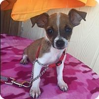 Adopt A Pet :: Kalista - Elk Grove, CA