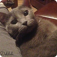 Adopt A Pet :: Delilah - Mansfield, OH