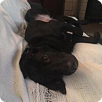 Adopt A Pet :: Daisy Lou - Newport, KY